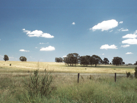 Pasture land in the Brigalow Belt. (Photo by Leonie Seabrook)