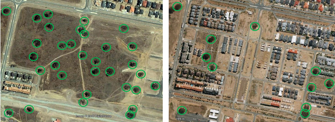Figure 2. Over two-thirds of the mature eucalypts at this site (left) were removed for this section of the new suburb of Gungahlin in Canberra (right) (Source: Google Earth).