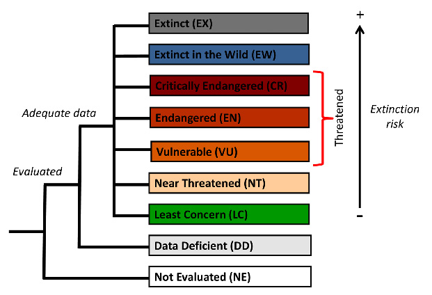 Figure 1: he IUCN Red List categories (Figure by Lucie Bland).