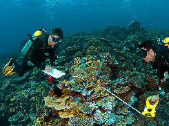 Monitoring in the Great Barrier Reef Marine Park (Photo by Juergen Freund, AIMS)