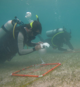 Watching the grass grow: A multi-disciplinary investigation on the seagrasses of Moreton Bay has found that if water clarity could be improved, seagrasses will cope better with rising sea level. (Photo by Megan Saunders)
