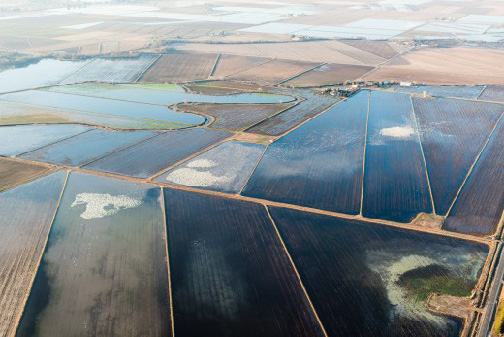 An aerial view of Snow Geese in a flooded rice field, Central Valley, http://centerforopenscience.org/stats_consulting California. (Photo courtesy TNC and Drew Kelly)