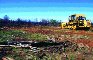 A new age of offsets policy does not seem to be stopping land clearing. Should we be looking to other alternatives?