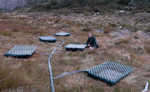 Artificial ponds in natural breeding habitat in Kosciuszko National Park, where captive and wild bred eggs from the Critically Endangered southern corroboree frog (Pseudophryne corroboree) have been placed to prevent contact with co-occurring reservoir hosts and eliminate mortality from premature pond drying. This is one strategy among many being explored to overcome the challenge of chytrid. (Photo by David Hunter)
