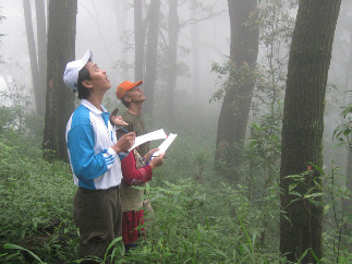 Sugeng Budiharta (on the left) counting epiphytic orchids in Indonesian forests.