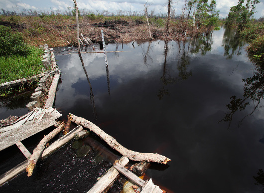 Micro dams are being constructed as part of the rehabilitation of degraded peatland. (Photo by Josh Esty)