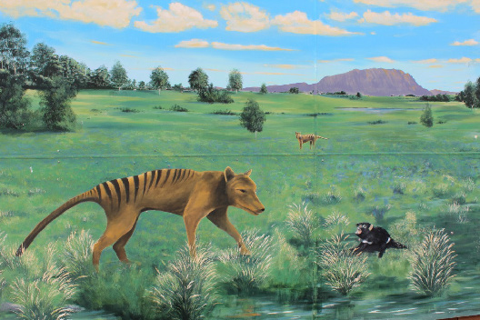 Our ever changing landscapes: pictured here is a mural in the town of Sheffield in Tasmania showing a Tasmanian landscape with the now extinct Tasmanian tiger and the threatened Tasmanian devil. The Tasmanian tiger went extinct due to a number of stresses including over hunting, habitat loss and disease. Dealing with any of these threats individually probably wouldn't have saved this species just as dealing with climate change or land-cover change separately may not save many of today's threatened species into the future. The key lies in understanding the interactions between the multiple stressors. (Photo by Chrystal Mantyka-Pringle)