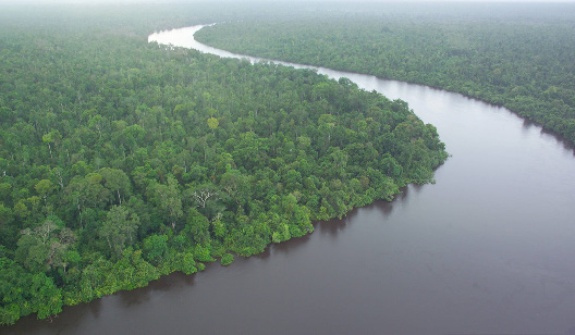 A peat swamp forest in Kalimantan. (Photo by Ruanda Agung Sugardiman)