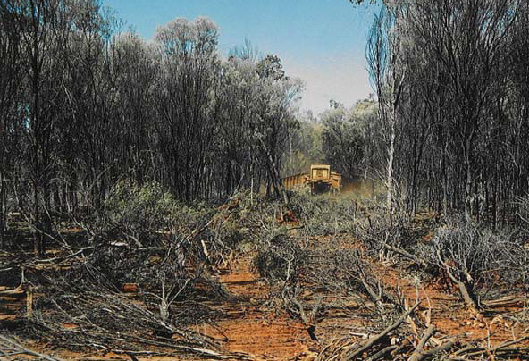Clearing of mulga in central Australia. Conservation activities in heavily cleared landscapes focus on keeping the remaining large patches intact, often disregarding the increasingly important role of smaller patches in conserving biodiversity. (Photo by Michelle Venter)