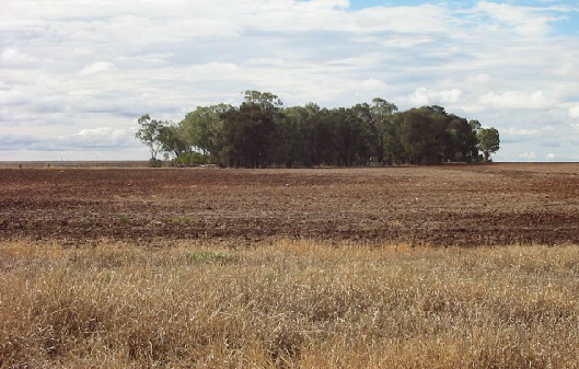 Example of coarse-scale vegetation fragmentation (forest patch surrounded by crops, South Brigalow Belt). (Image by Clive McAlpine)