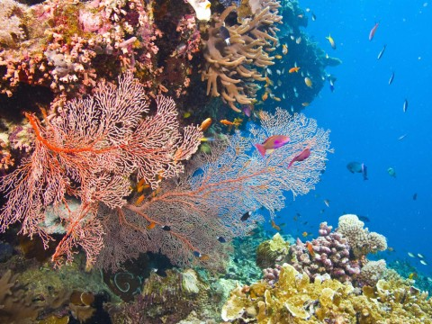 The Great Barrier Reef is under threat from runoff from the adjacent coastline carrying nutrients, sediments and pesticides. (Image Debra James, WWF)