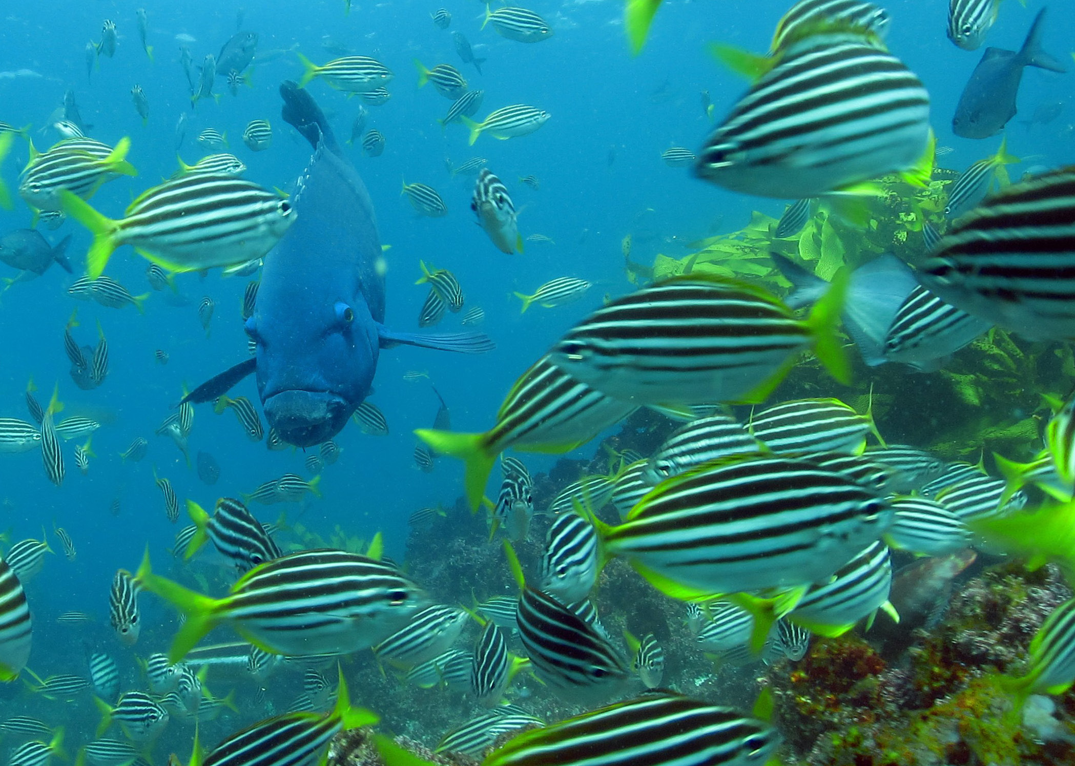 Fish Pictures from Australia   Sport Fishing Magazine