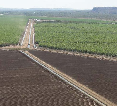 Irrigated agriculture in the Ord River Development. Developing the north will involve trade-offs with biodiversity. (Photo by Garry Cook)