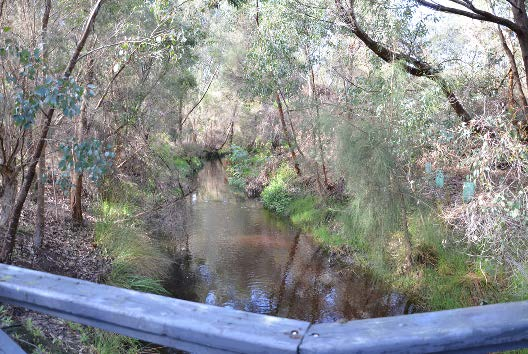 Bannister Creek after restoration had been completed (September 2013). (Photograph courtesy of SE Regional Centre for Urban Landcare.)