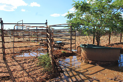 An example of a leaky trough system on a property between Broome and Port Hedland. Developing a waterless barrier would involve replacing this water point with a leak-proof tank, so that toads cannot access the surface water in the dry season. (Photo by Darren Southwell)