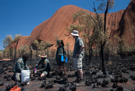 Sampling soils for metagenomic analysis of microbial diversity at a recently burnt site at Uluru. (Photo courtey of Andrew Bissett)