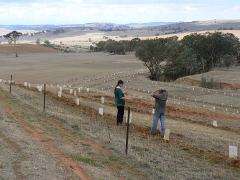 Ecological restoration is complex and expensive. Economists can provide multiple insights on how to make it more effective. (Photo courtesy of Greening Australia)