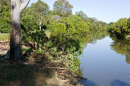 Riparian vegetation along Brisbane River. Queensland's waterways provide over $10 billion annually in economic benefits.