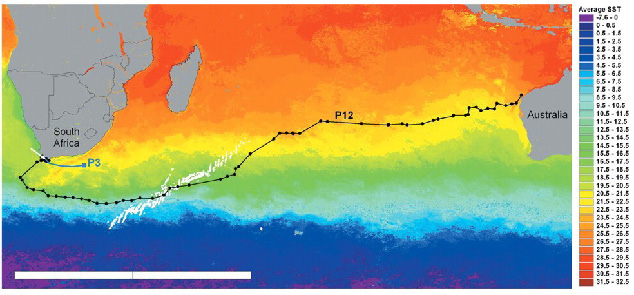 Figure1. Positions of (dots) and track followed by (black line) shark 'P12' during coastal and transoceanic movement. (Image from Bonfil et al, 2005)