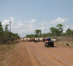 Pastoralism is the primary land use in the catchment. (Image by Vanessa Adams)