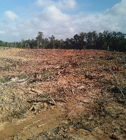 Photo of cleared forest