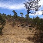 What drives landholders' participation?