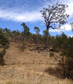 Biodiverse carbon plantings in an agricultural landscape in Victoria. (Photo by Nooshin Torabi)