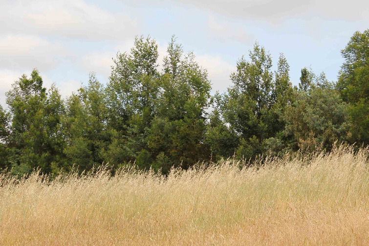 Establishing native trees on agricultural land can yield both carbon and biodiversity benefits. CSIRO and CEED researchers have examined what policy settings will deliver the greatest returns in both. (Photo by David Salt)