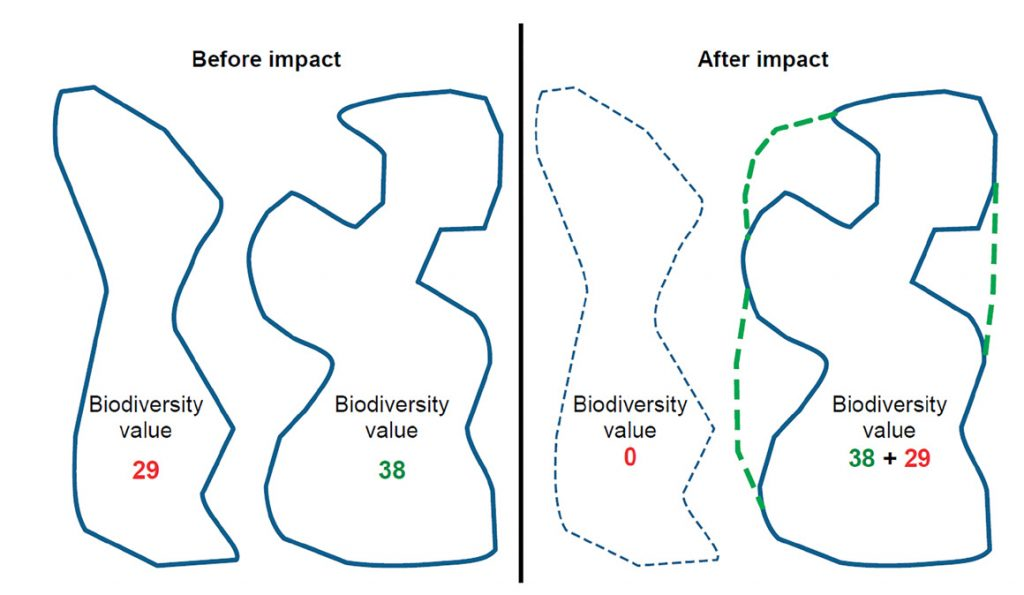 Figure 1: A highly simplified illustration of the goal of no net loss of biodiversity values. Values are lost due to the impact of the development and gained through management actions to improve the area and condition of the offset site. A major challenge is making sure that the values gained in the offset are equivalent to the values lost. The Disaggregated Model individually evaluates whether gains balance losses for all elements of biodiversity of interest and makes the tradeoffs more transparent. (This diagram is in the report Guidance on Good Practice Biodiversity Offsetting in New Zealand available at http://www. doc.govt.nz/documents/our-work/biodiversity-offsets/the-guidance.pdf).