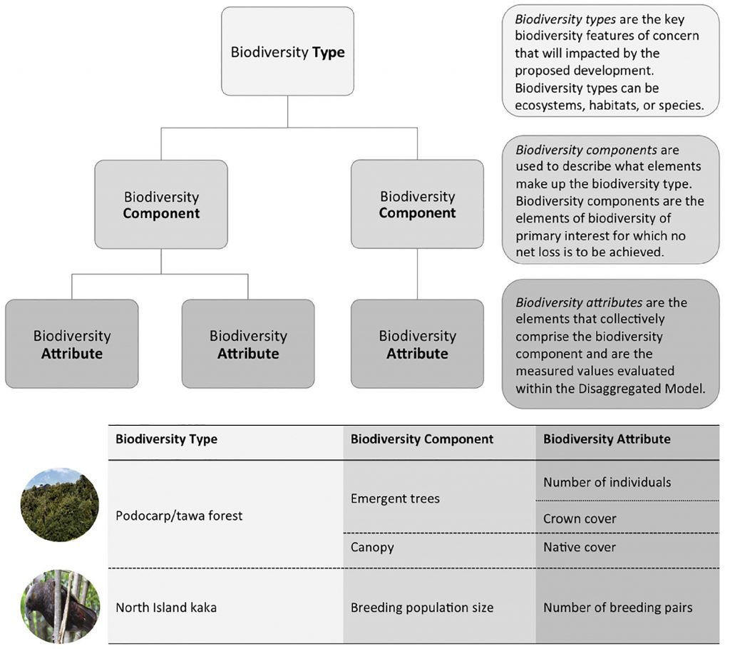 Figure 2: The hierarchical framework underpinning the structural foundation of the model (with an example of biodiversity type, component and attribute at the bottom). Collectively, the levels describe 'what we care about' in the context of a biodiversity offset proposal. Each biodiversity type impacted by a development is entered into a separate model template and as many components and