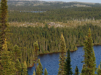 Part of Canada's vast boreal forest. Predictions of future climate largely agree that this ecosystem will experience substantial warming, and face multiple direct and indirect effects, from more frequent large wildfires and extreme droughts. This could lead to potential shifts in ecosystem state. (Photo CC2.0 peupleloup)