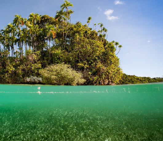 Seagrass and the adjacent land in Palau. Which part of the landscape/ seascape should you prioritise if you want to maximise the extent of coastal marine ecosystems? (Photo by Mark Priest)