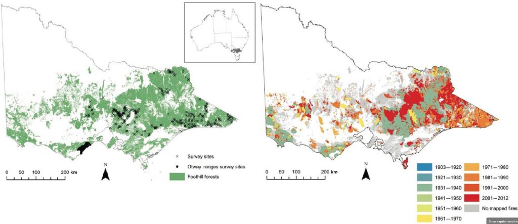 Figure 1: Extent of foothill forest vegetation in Victoria and (right) fire history of foothill forest. (From Kelly et al, 2017)