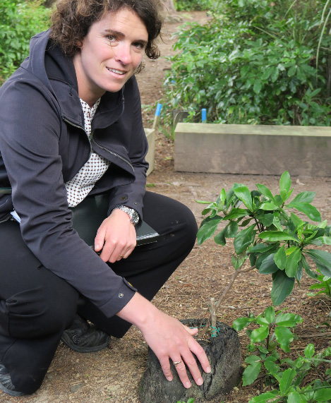 Danielle Shanahan with a trial planting of a Kirk's Daisy in which the sapling is planted within a ponga log. Experiments in a variety of restoration techniques are being trialled all over Zealandia.