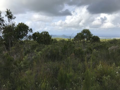 Protected native scrub in Northern NSW