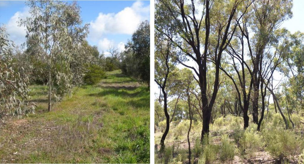 Restoring native woodlands (right) on degraded land (left) can take considerable resources (time and money). Working without a good explicit conceptual model of how the ecosystem functions or responds to management interventions is a bit like shooting in the dark. Most of the time you miss your target and it's very hard to learn from success or failure.