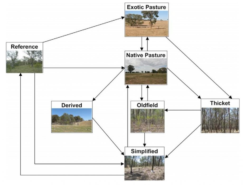 Figure 2: A conceptual state-and-transition model for non-riparian woodlands (adapted from Rumpff et al 2010a). State changes are determined by a change in the value of individual vegetation attributes. (Note, management interventions, threats and state variables are not shown on this figure. The states are described in Rumpff et al 2010.)