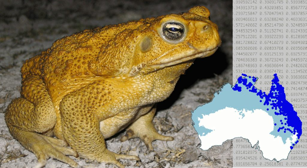 Species distribution models are used for all sorts of purposes in conservation planning and management. For example, they have been used to understand the invasion of cane toads in Australia. (Cane toad image by Ben Phillips).