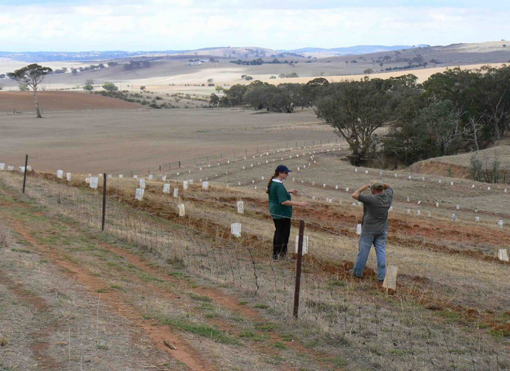 What is the benefit and cost of a environmental restoration project? What are the important assumptions you need to make in estimating the costs and benefits? These are imporant questions to answer when prioritising which projects will be funded and which won't. (Image courtesy of Greening Australia.)