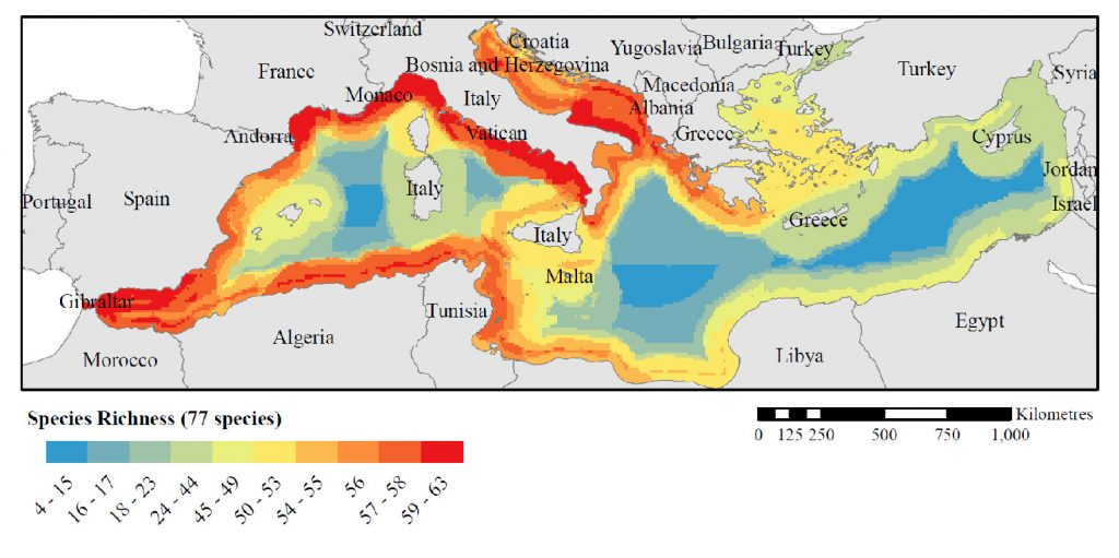 Figure 1: Species richness of 77 threatened vertebrates in the Mediterranean Sea. If the Sea was under the control of a single country, planning an effective reserve system to protect these threatened species would be considerably simpler than working with the actual situation of 20 countries, each with different rights, values and histories in relation to the Mediterranean. (From Mazor et al, 2013)