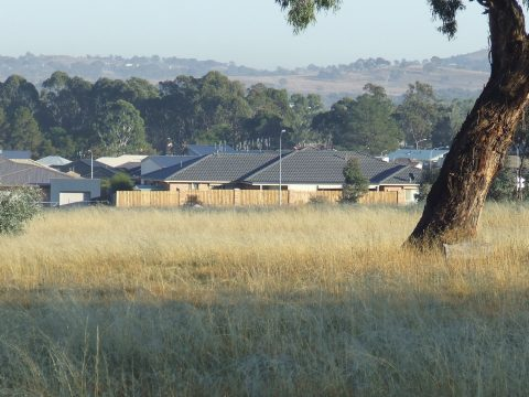 A scene common in many Australian peri-urban zones– new houses, open fields, scattered trees and remnant patches of native vegetation. This landscape seems unremarkable but is actually a complex mosaic of biological, legal, economic and social values. Developing the economic potential of these landscapes doesn't have to occur at the expense of its biological values. (Photo by Phil Gibbons)
